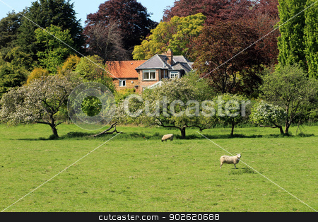 Farm in countryside stock photo, Farm in countryside with sheep in green field. by Martin Crowdy