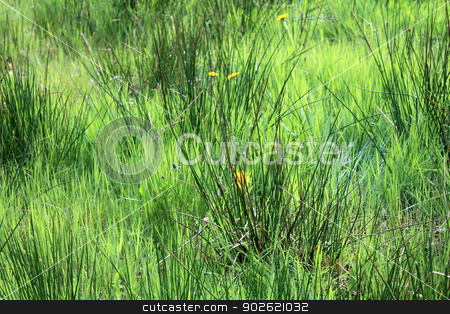 Long grassy green meadow stock photo, Scenic view of long green grass in countryside. by Martin Crowdy