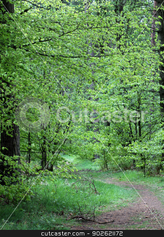 Pathway in forest stock photo, Scenic view of pathway receding through leafy green forest in countryside. by Martin Crowdy