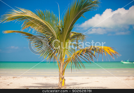 Small palm tree in the center of the photo stock photo, Small palm tree in the center of the photo by Dmitry Travnikov