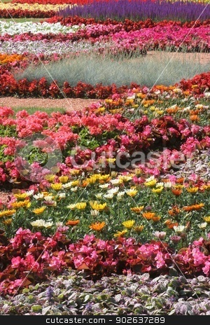 Flowers in park stock photo, Flowers in park by Zvonimir Atletic