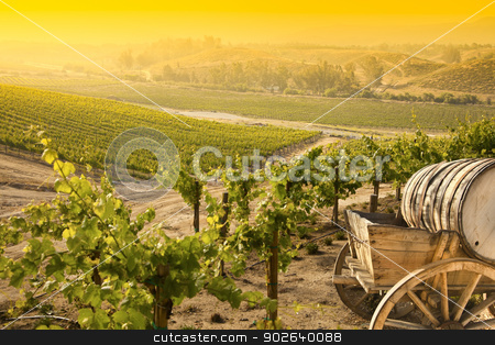 Grape Vineyard with Old Barrel Carriage Wagon stock photo, Grape Vineyard with Vintage Barrel Carriage Wagon.  by Andy Dean