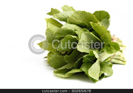 Chinese cabbage isolated on white background stock photo, A bunch of Chinese cabbage isolated on white background by pattarastock