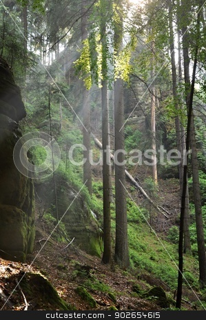 Rays of sun stock photo, Rays of sun in the fog in the forest by Ondrej Vladyka