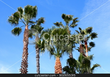 Palm Trees stock photo, Group of palm trees with blue sky and some clouds in the background. by Henrik Lehnerer