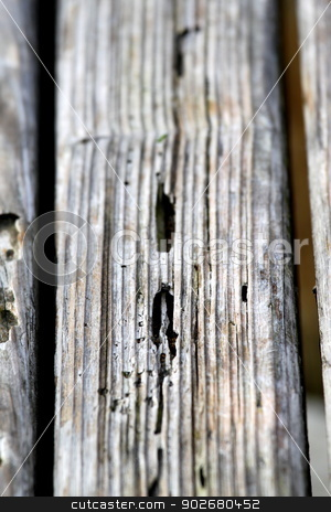 Old Wood Texture stock photo, Texture of old wood with many termites holes. by Henrik Lehnerer