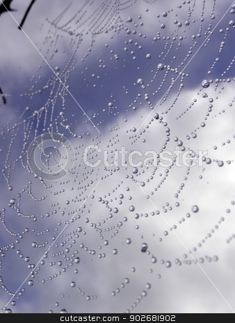 Spider and the blue sky. stock photo, Spider and the blue sky. by dadalia