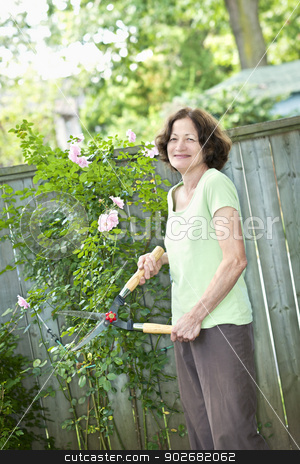 Senior woman pruning rose bush stock photo, Happy senior woman gardening and pruning rose bush with clippers by Elena Elisseeva