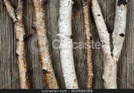 Birch trunks stock photo, Birch tree trunks and branches on natural wood background by Elena Elisseeva