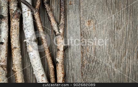 Birch trees background stock photo, Birch tree trunks and branches on natural wood background by Elena Elisseeva
