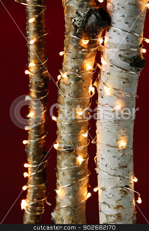 Christmas lights on birch branches stock photo, Birch trees wrapped in Christmas lights on red background by Elena Elisseeva