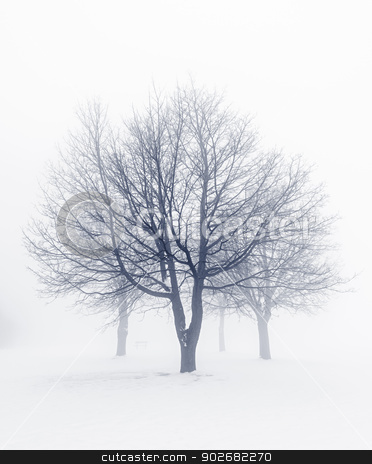Winter trees in fog stock photo, Winter scene of leafless trees in fog by Elena Elisseeva