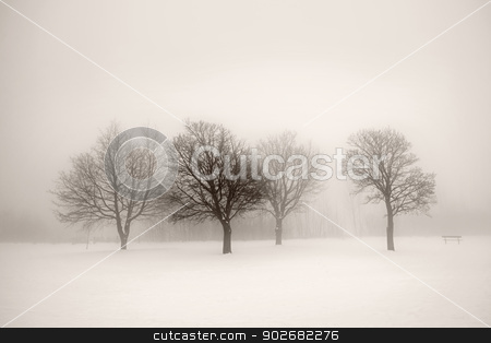 Winter trees in fog stock photo, Foggy winter scene with leafless trees in sepia by Elena Elisseeva
