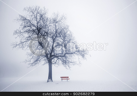 Winter tree in fog stock photo, Foggy winter scene with leafless tree and red park bench in fog by Elena Elisseeva
