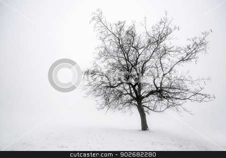 Winter tree in fog stock photo, Foggy winter scene of single leafless tree in fog by Elena Elisseeva