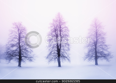 Winter trees in fog at sunrise stock photo, Foggy winter sunrise scene with three leafless trees by Elena Elisseeva