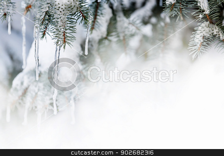 Winter background with icicles on fir tree stock photo, Christmas winter background with icicles hanging from spruce branches by Elena Elisseeva