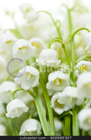 Lily-of-the-valley flowers stock photo, Lily of the valley delicate flowers macro closeup by Elena Elisseeva