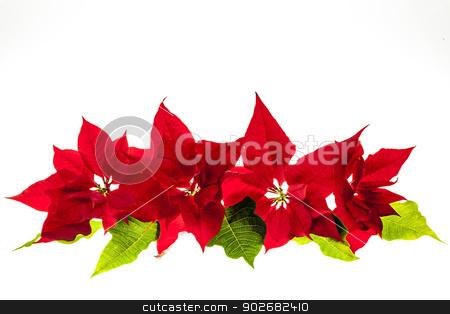 Arrangement with Christmas poinsettias stock photo, Christmas arrangement with red poinsettia plants isolated on white background by Elena Elisseeva