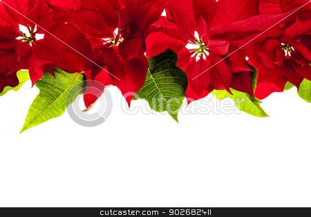 Christmas border with red poinsettias stock photo, Christmas border of red poinsettia plants isolated on white background by Elena Elisseeva