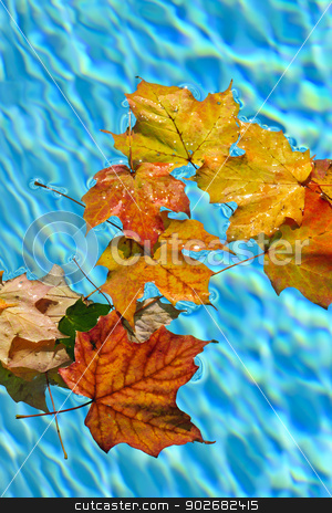Fall leaves floating in pool stock photo, Fall leaves floating in swimming pool water by Elena Elisseeva