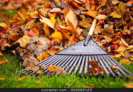 Fall leaves with rake stock photo, Pile of fall leaves with fan rake on lawn by Elena Elisseeva