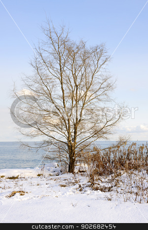 Winter tree on shore stock photo, Single tree on snowy winter shore of lake Ontario in Sylvan park Toronto by Elena Elisseeva