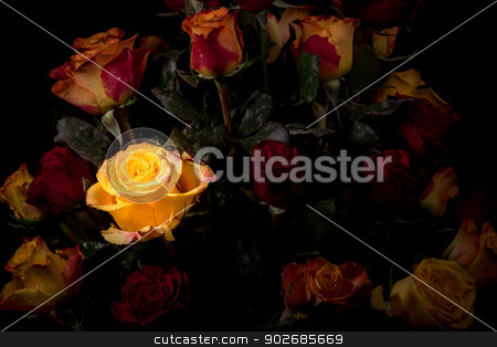 Yellow rose stock photo, A beautiful rose glowing in a bouquet of red and yellow roses by derejeb