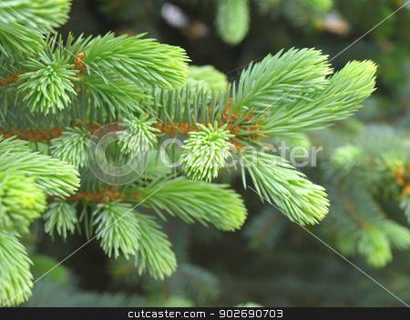 Green twig of the fir stock photo, Green twig of the fir. Shallow DOF. by Sergei Devyatkin