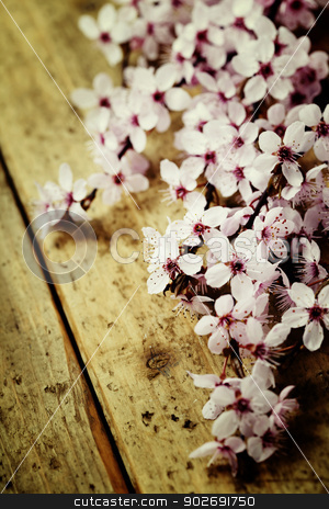 Spring Blossom stock photo, Spring Blossom over wooden background by klenova