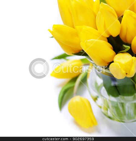 yellow tulips stock photo, Beautiful yellow tulips over white by klenova