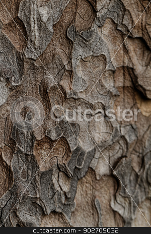 Wooden texture. Macro pine tree stock photo, Wooden texture. Crimean pine tree, close-up view. by Nneirda