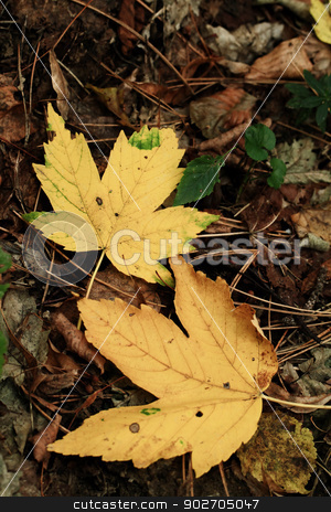 Autumn leaves stock photo, Colorful background of autumn leaves by Nneirda