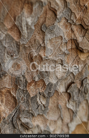 Wooden texture. Macro pine tree stock photo, Wooden texture. Crimean pine tree, close-up view. by Nneirda