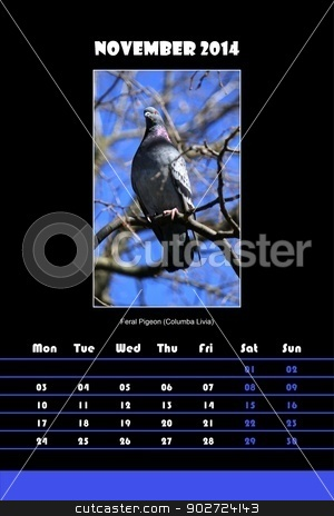Bird calendar for 2014 - november stock photo, Colorful english bird calendar for november 2014 in black background, feral pigeon (columba livia) picture by Elenarts