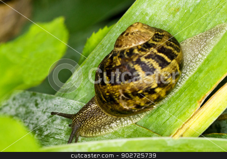 at full speed!! stock photo, close up of snail on leaf by andrew33