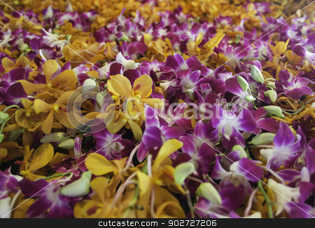 Purple and orange orchid stock photo, Purple and orange orchid by pipop kangsiri