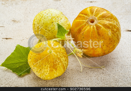 lemon cucumbers stock photo, three lemon (or apple) cucumbers with leaves on rough white painted wood surface by Marek Uliasz