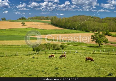 Cow herd in green landscape stock photo, Herd of cows in green landscape under blue sky by xbrchx
