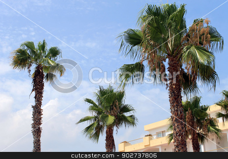 Tropical palm trees and hotel stock photo, Tropical palm trees and hotel in tourist resort, Spain by Martin Crowdy