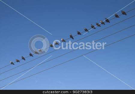 Birds On A Wire stock photo, Quite a striking image of birds perched on a  telephone cable. There is room for editorial and may represent communication in more ways than one.   by Stewart Scott