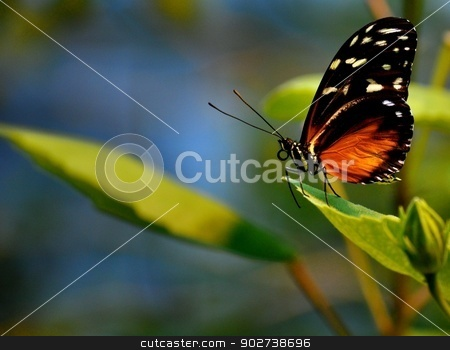 Butterfly on leaves stock photo, Butterfly on leaves by Liane Harrold