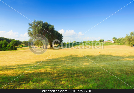 Golf course stock photo, Golf course of green-yellow color with olive trees in sunny day by Natalia Macheda