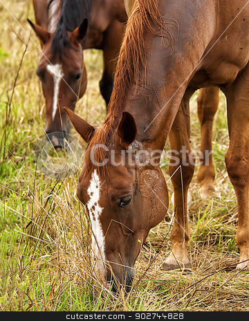 Horses (1) stock photo, Two brown horses eating grass. by W. Paul Thomas