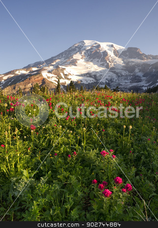 Late Summer Wildflowers Mt. Rainier National Park Skyline Trail stock photo, Wildflowers and Washington States Highest Peak by Christopher Boswell