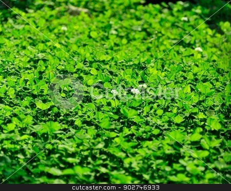 Background - Clover stock photo, Glade of a blossoming clover filled in with a sunlight by benjaminlion