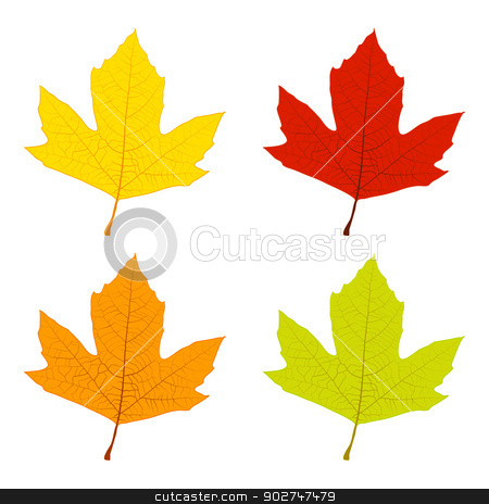 Autumn Leaves stock vector clipart, Set of colored sycamore leaves, green, yellow, orange, red. EPS10 vector. by benjaminlion
