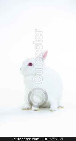 Fluffy white rabbit stock photo, Fluffy white rabbit on white background by Wavebreak Media