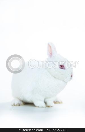 White rabbit stock photo, White rabbit sitting against white background by Wavebreak Media