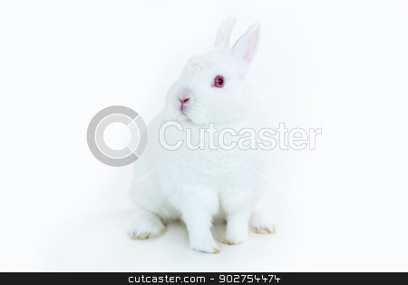 White bunny facing camera stock photo, White bunny facing camera on white background by Wavebreak Media